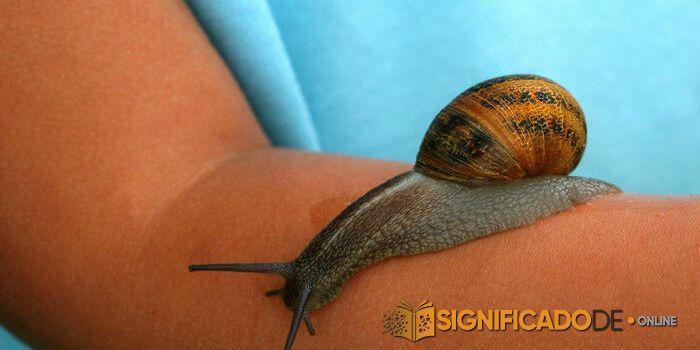 soñar con caracoles en el cuerpo