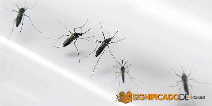 soñar con muchos mosquitos